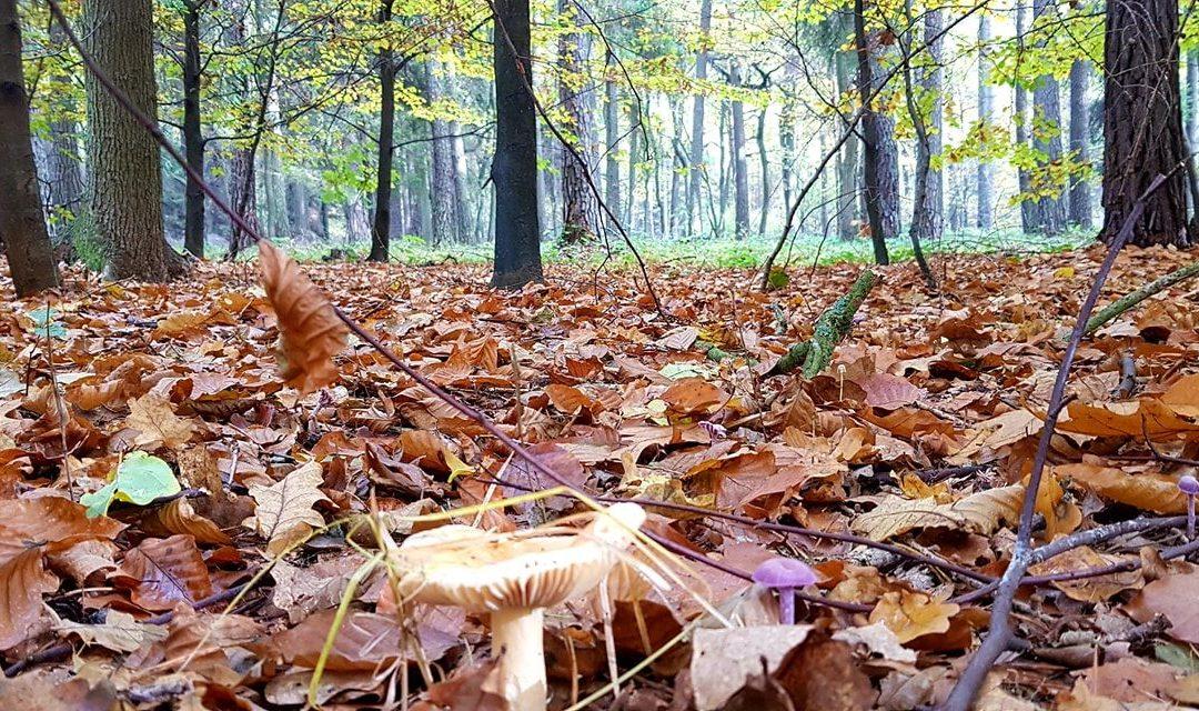 Złota Polska Jesień (The Golden Autumn of Poland).